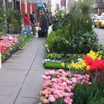 NY flowers